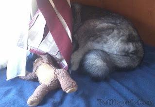 Photo: Rozz vill inte vara med på bild