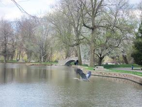 Photo: Crane flying over pond at Eastwood Park in Dayton, Ohio.
