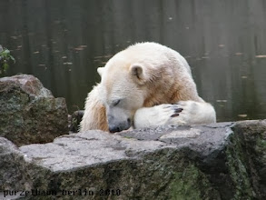 Photo: Knut doest auch ;-)