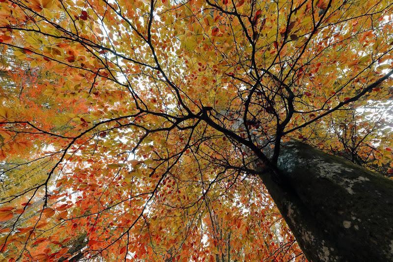 Semplicemente foliage di Montanaro