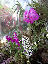Photo: Enough with the orchids, already.