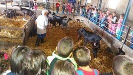 Visita de escolares a una granja de cabras de Lubrín en 2015.