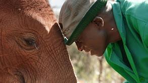 Baby Elephant Rescue thumbnail
