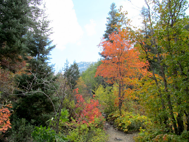 Colorful leaves along the trail