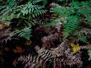 Photo: The forest floor