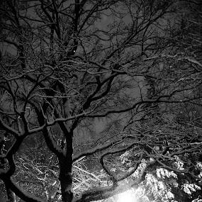 ... by Zvonimir Cuvalo - City,  Street & Park  City Parks ( winter, benches, tree, park, snow )