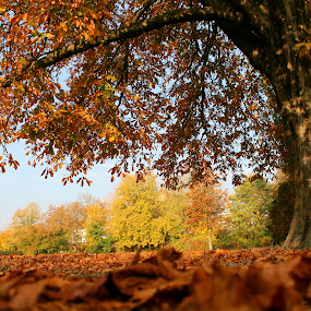 In the morning - Autumn in Berlin by Britta Rogge - Landscapes Forests ( landscape photography, fall, color, nature, tree, autumn, colors, colorful, landscape, park )