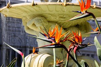 Photo: Year 2 Day 141 - Stralitzia and the Fountain at Royal Exhibition Building in Carlton Gardens