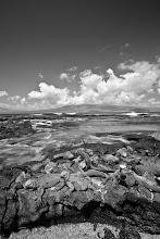 Photo: Black and white image of marine iguanas in the Galapagos Islands, Ecuador.