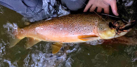 Photo: A beast of a brown trout- Streamer fishing on the Mad River in Ohio