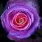 DSC01367a2.jpg