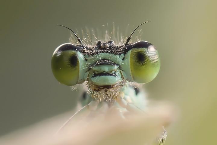 Occhi di maurilu