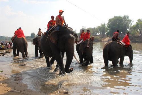 Khu du lịch Buôn Đôn sôi nổi cùng lễ hội voi 6