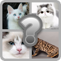 Guess these Cute Cats