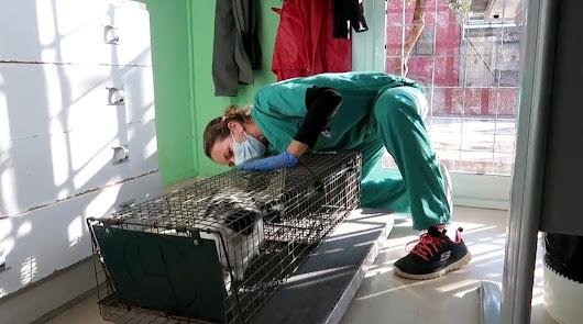 Aprobado en Almería el proyecto de ordenanza sobre tenencia de animales