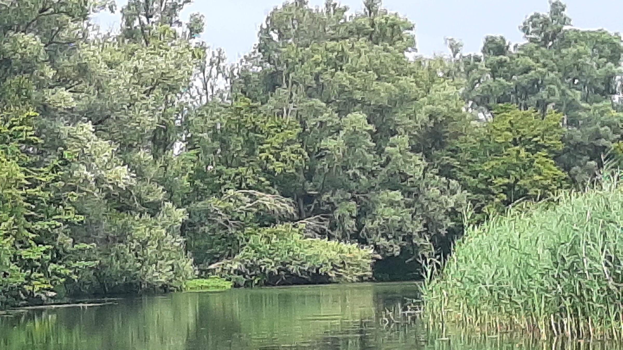 Heerenleed in de Biesbosch
