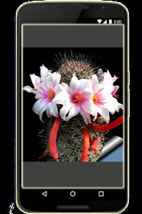 Ozdobné rostliny kaktusu - náhled