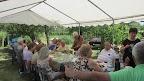 2019.07.06 Látogatás a szőlősgazdáknál