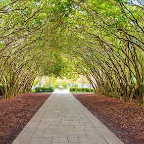 Green Tunnel by Gabriela Zandomeni - City,  Street & Park  City Parks