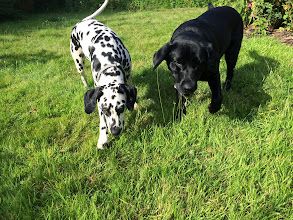 Photo: Molly Dalmation and Floss Lab