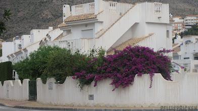 Photo: Vår vandring börjar ju på Calle Mistral där ett staket pryds av denna vackra Bouganvilla