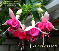 Photo: Boneput