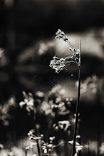 Photo: I feel a change in the wind... and meet it with both fear and joy... as I have been too long in a stagnant place....  I bid you all goodnight  #monochromeartyclub  #monochrome  #bwphotography
