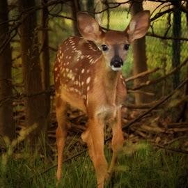 Forest Friend by Millieanne T - Digital Art Animals