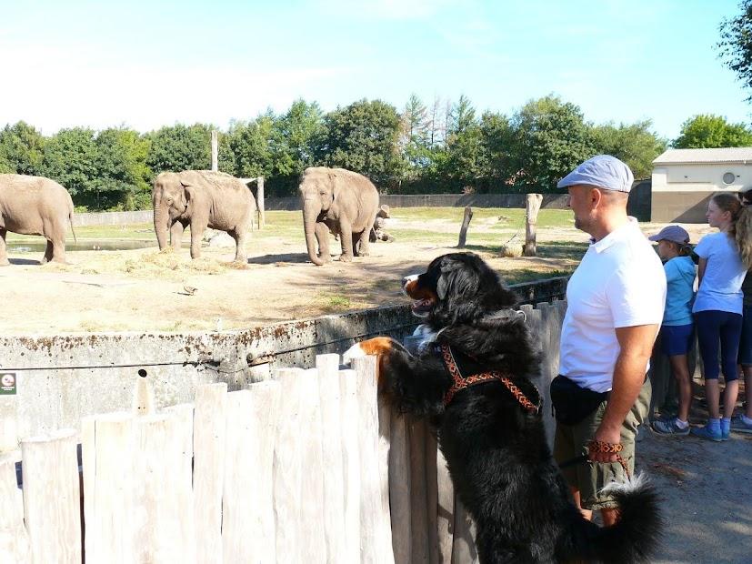 Zoo-Safari Givskud