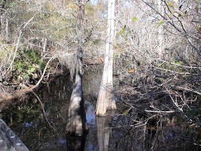 Photo: One of the creeks within the Great Satilla Preserve