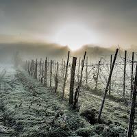 Inverno in Toscana di francesco|gallorini
