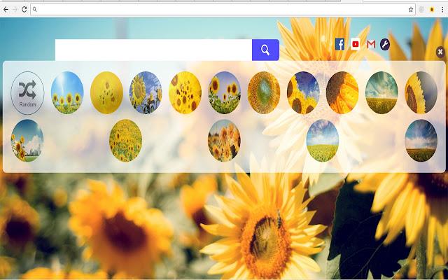 Sunflower Wallpapers Full HD New Tab