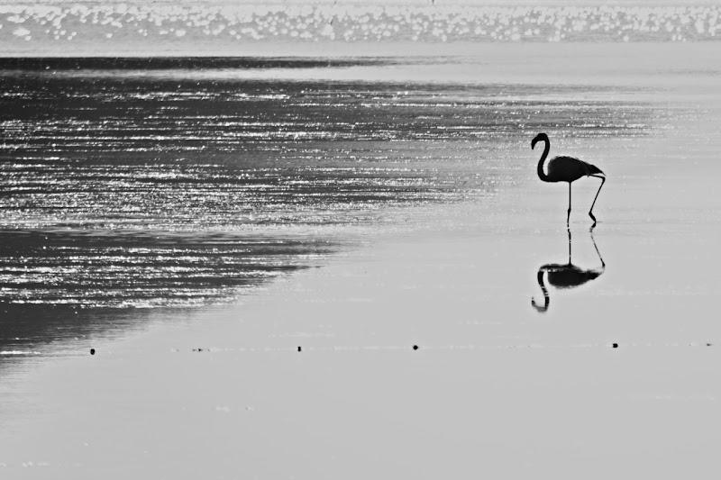 Riflesso sull'acqua di francy_murroni