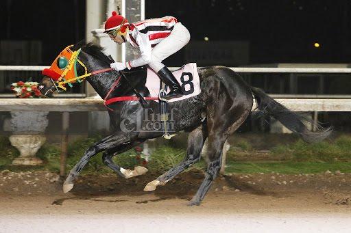 Tanito Campeon (Tumblebrutus) conquistó Handicap (1000m-Arena-CHS). - Staff ElTurf.com