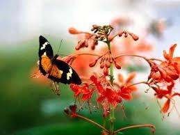 Le rêve du papillon - Au présent