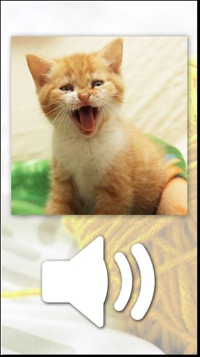 Cat Games Free Puzzles  screenshots 1