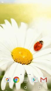 Jaro Květiny Pozadí -Volný - náhled