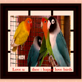 caged! by Jayita Mallik - Typography Captioned Photos ( cage, art, nature, abstract, birds )