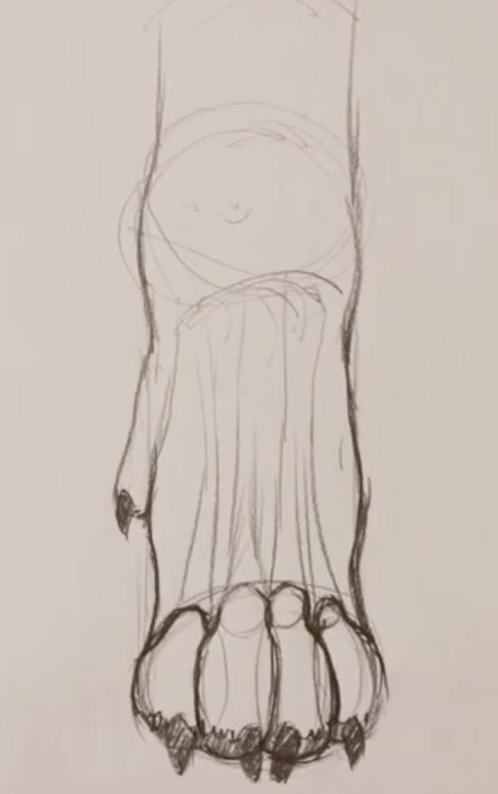 draw feet