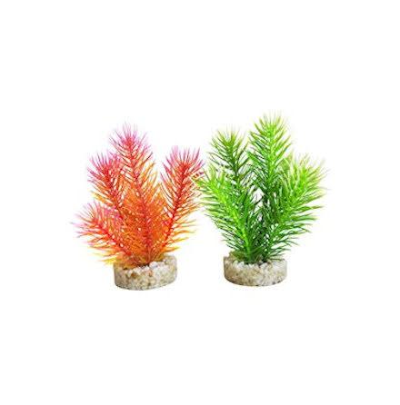 Cabomba 14 cm olika färger