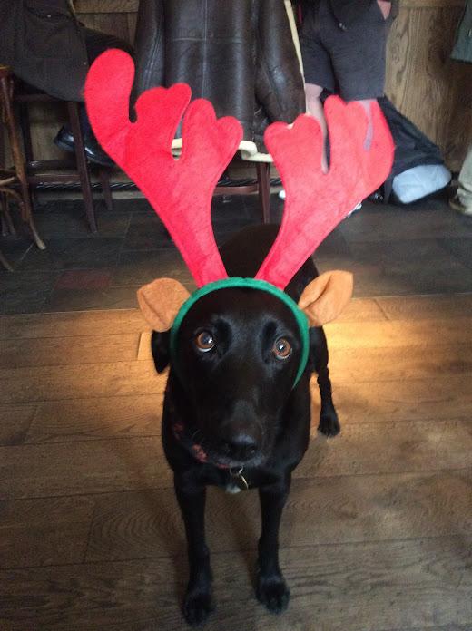 Reindeer Run Dog