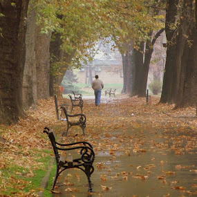 Autumn by Emil Chuchkov - City,  Street & Park  City Parks ( cuckove kodak autumn fall )