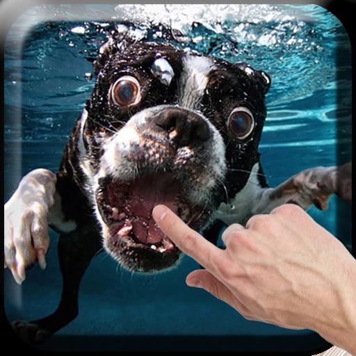 Dogs Underwater Live Wallpaper