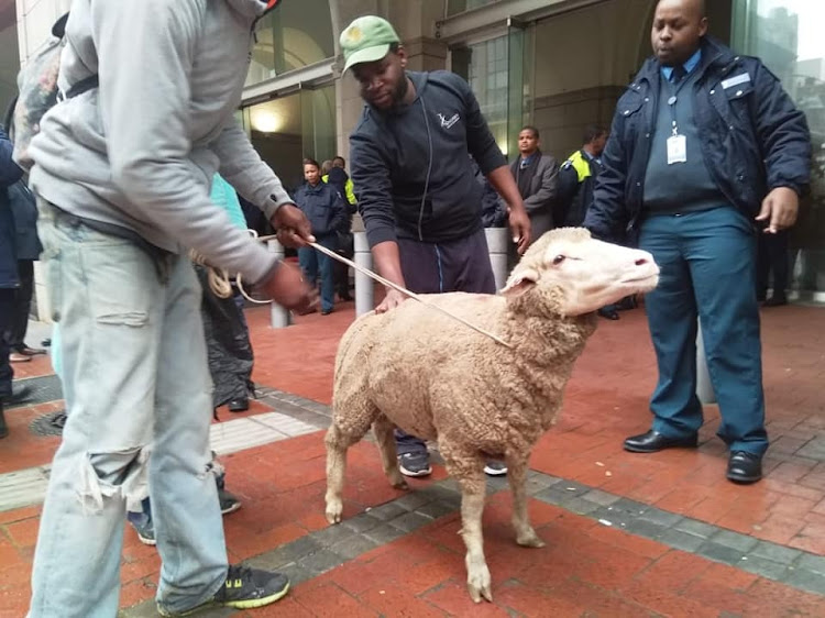 Sheep confiscated in protest against 'fining the homeless' in Cape Town