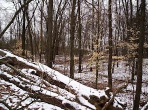 Photo: Fallen tree along the Old Field Trail in Waterloo Recreation Area