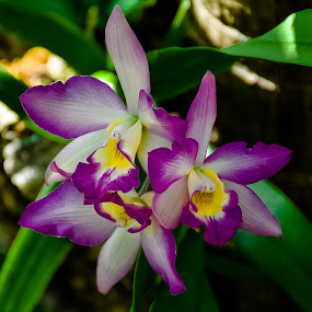Tropical Flowers by Robert Smith - Flowers Flowers in the Wild ( lilies, tropical, hot, flowers, humid, climate )