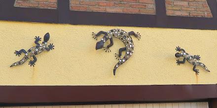 Photo: Lézards des ...murailles