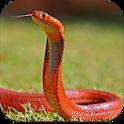 Snake Wallpaper HD icon