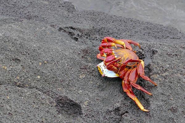 Isla de San Cristobal, Galapagos, 2017/18 di Cristhian Raimondi
