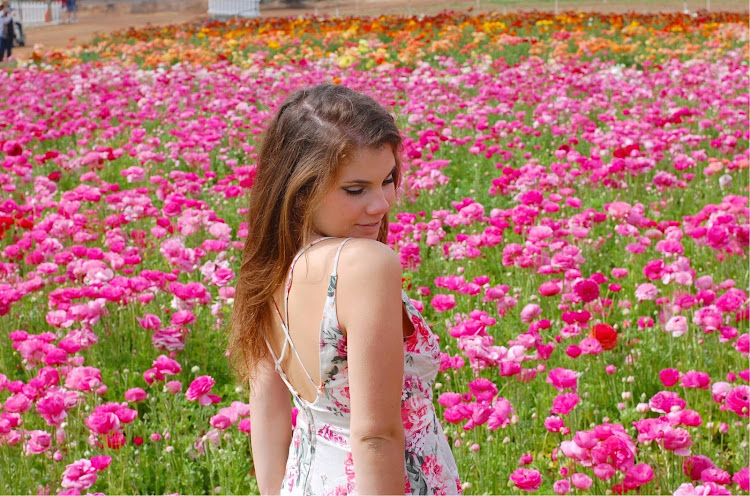 Can you tell I'm taken by the buttercup ranunculus at the Flower Fields at Carlsbad Ranch?